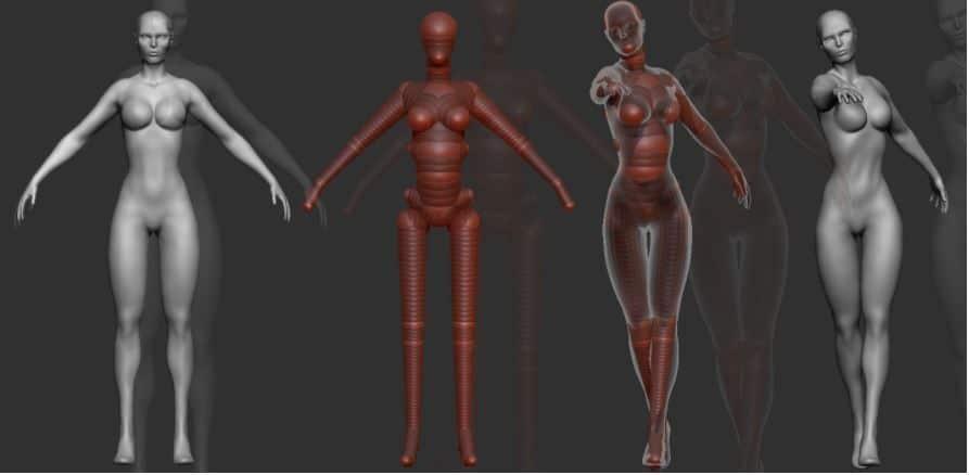 Base anatómica femenina Zbrush